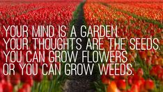 Your Mind is a Garden Your Thoughts are the Seeds You Can Grow Flowers  Or You Can Grow Weeds