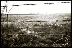 Barbed-Ryan Tuttle
