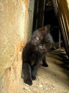 magical-meow:   like dark chocolate! by Flóra Soós    Via Flickr: