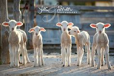 {blessed friendship - fine lamb photography - farm fresh} by YesandAmen, $5.50      *enlargements, too.