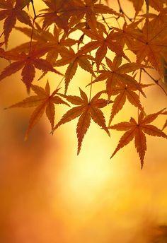 momiji  | #warmcolors #yellow #orange