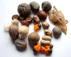 Tropical Seeds; Exotic Seeds, Vegetable seed & Tropical Plants Mail Order