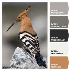 Poupa Hoopoe paint colors by Sherwin-Williams