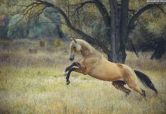 GRACEFIL AS A CHEETAH Equine photography by Ekaterina Druz