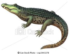 Stock Illustration - Reptile Crocodile - stock illustration, royalty free illustrations, stock clip art icon, stock clipart icons, logo, line art, pictures, graphic, graphics, drawing, drawings, artwork