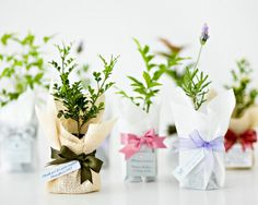 """DIY wedding favour ideas we love! Miniature Seedling Trees - """"Watch us Grow"""" """"The Perfect Pear""""Miniature Bottles of LimoncelloPersonalised Fortune Teller Sydney Wedding, Wedding Dj, Wedding Themes, Elegant Wedding, Wedding Styles, Wedding Decorations, Wedding Ideas, Magical Wedding, Woodland Wedding"""