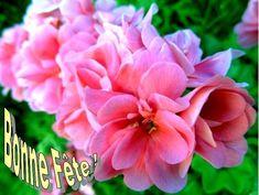 """L'élément germanique ing- qui compose le prénom Ingrid, est le nom d'une divinité païenne. Quant à l'élément -rig, il peut être interprété au sens de """"cavalier"""". Sainte Ingrid de Skänninge, Princesse suédoise (✝ 1282) --- C'est aussi la Journée internationale de la barbe. Leila, Annie, Rose, Flowers, Cavalier, Saint Camille, Ingrid, French Quotes, Virgin Mary"""