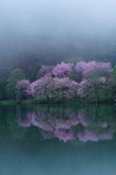 ◦☼✩◦ ♥ レ O √ 乇 ♥◦✩☼◦ ~ Cherry blossom, Lake Nakatsuna, Nagano, Japan. Pretty Pictures, Cool Photos, Beautiful World, Beautiful Places, Beautiful Scenery, Landscape Photography, Nature Photography, Amaterasu, All Nature