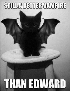 Vamp-Cat. Ignoring the comment about Edward... This is the cutest cat EVER!!!! :)