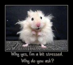 stressed--how I have felt lately...