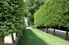 Pleached hornbeam at Hidcote - In pleaching individual trees are trained in a narrow vertical plane, almost like a hedge on stilts. Pruning Fruit Trees, Trees To Plant, Lush Garden, Garden Plants, Back Gardens, Outdoor Gardens, Hornbeam Hedge, Landscape Design, Garden Design