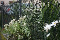 """katydidnot: """" lisa-rayner: """" (via Kate Davies Designs: Anne Eunson's artistry) Amazing hand knitted Shetland lace garden fence """"This beautiful and imaginative creation is the work of Anne Eunson of..."""