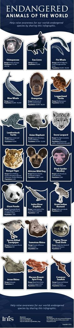 INFOGRAPHIC: Endangered animals from around the world | Inhabitat - Sustainable Design Innovation, Eco Architecture, Green Building