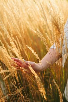 The soft caress of wheat...