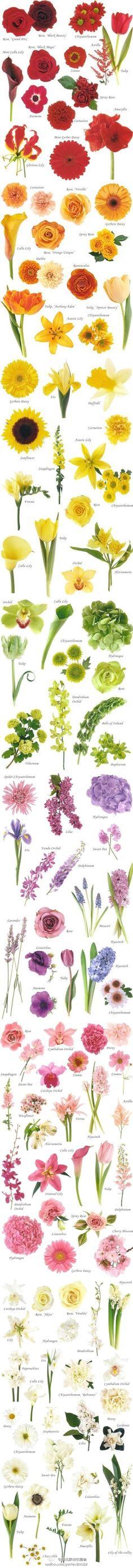 Color Gradient Flower Chart