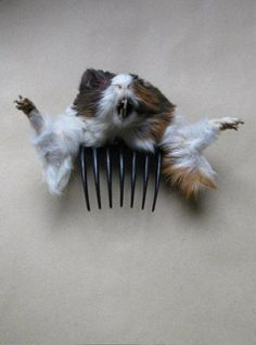 Badly Stuffed Animals: Facebook Collates The Very Best Of Bad Taxidermy (PICTURES). Rat hair clip. Be the center of attention at any event, guaranteed... Enjoy RUSHWORLD boards, WEIRD WILD WONDERFUL, UNPREDICTABLE WOMEN HAUTE COUTURE and LULU'S FUNHOUSE. Follow RUSHWORLD! We're on the hunt for everything you'll love!