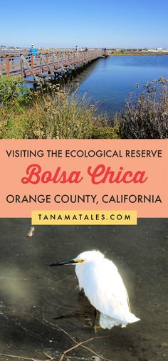 Complete guide to visit the Bolsa Chica Ecological Reserve | California | Things to do in Huntington Beach | Things to do in Orange County | Things to do in Seal Beach | Things to do near Anaheim | Bolsa Chica State Beach | Orange County Beaches | Orange County Hikes | Southern California Hikes | Orange County Aesthetic | Orange County Photo Locations | Orange County Bucket List | Pacific Coast Highway Road Trip | Southern California Road Trip | Huntington Beach Hikes