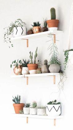 Best Plant Shelf Decor Ideas