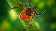 How to Protect Yourself from Lyme and Tick-Borne Diseases
