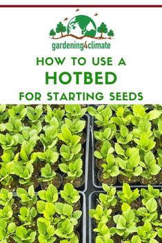 A hotbed can produce the necessary heat for germinating your seeds a bit earlier and without the need for electricity. Learn here how to set up a hotbed and how to use it for starting seeds. Growing Herbs, Growing Vegetables, Germinating Seeds Indoors, Gardening For Beginners, Gardening Tips, Organic Gardening, Sustainable Gardening, Vegetable Gardening, Starting Seeds Indoors