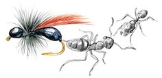CO-Blog-ants-and-lure