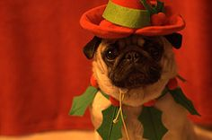 Holiday Digital Photo Tips