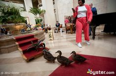 Duck March at Lobby at The Peabody Orlando
