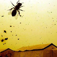 Tammam Azzam 'Refugee Camp', Digital Art, 2012.