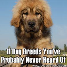 11 Dog Breeds You've Probably Never Heard Of