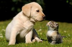 #animals #dogs #cats #kitty #kittens #puppy #puppies #horses #pigs #elephants #lions #tigers #owls #cute #catweek #whales #sharks #sharkweek #starprime #shopping #rewards #gators #zoo #farms #terriers #love