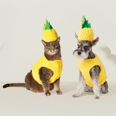 Pineapple Dog or Cat Costume. Pineapple Dog or Cat Costume. (Affiliate link) Pineapple Dog or Cat Costume. Pineapple Dog or Cat Costume. Themed Halloween Costumes, Pet Costumes, Scary Halloween, Adult Costumes, Halloween Makeup, Halloween Stuff, Pineapple Halloween, Pineapple Costume, Pet Dogs
