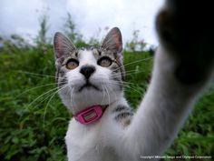 日本-3 | ネコギャラリー | デジタル岩合 動物写真家・岩合光昭氏 公認サイト