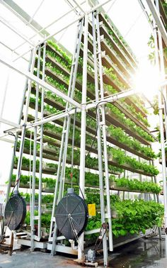 Urban Growth: Singapore's First Commercial Vertical Farm