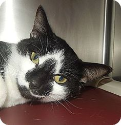 10/06/16 SL~~~Domestic Shorthair Cat for adoption in Newport, North Carolina - Sunny. Arrived at the shelter on 06/10/16