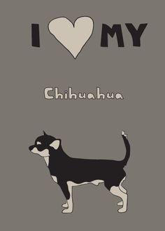 i love my chihuahua <3 <3 <3