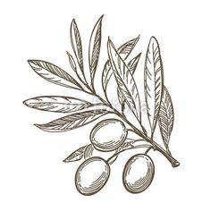 Olive branch- Athena