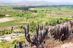 Fértil Valle del Limarí - Ovalle - Coquimbo  - Chile - httpbit.ly7mYC4f