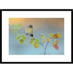 """Global Gallery 'Winter Colors' by Andres Miguel Dominguez Framed Graphic Art Size: 22"""" H x 30"""" W x 1.5"""" D"""