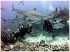 Roatan Shark Dive