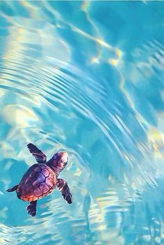 Swimming turtle... so cute!