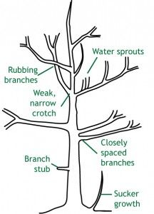 Tree Pruning - How to Prune HQ