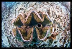 Giant clams over 120 years old can be found on the Great Barrier Reef