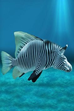 Finally they can take pictures of the real zebra fish – funny photoshop Underwater Creatures, Ocean Creatures, Tropical Fish Pictures, Photoshopped Animals, Animal Mashups, Cool Fish, Water Animals, Bizarre, Beautiful Fish