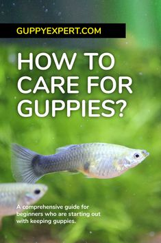 Guppy Fish Care – How to Care for Guppies? Freshwater Aquarium Plants, Tropical Fish Aquarium, Aquarium Fish Tank, Planted Aquarium, Freshwater Fish, Fish Aquariums, Fish Tanks, Fish Tank Cleaning, Fish Information