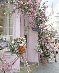 ♡ Pretty In Pink ♡ - Garten - Flowers Pretty In Pink, Pretty Flowers, Pink Flowers, Pink Roses, Fall Flowers, Beautiful Roses, Fresh Flowers, Wedding Flowers, Flowers Nature