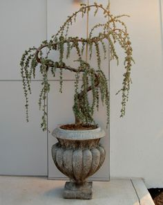 Creative Conifer Containers   Kentucky Gardener Web Articles