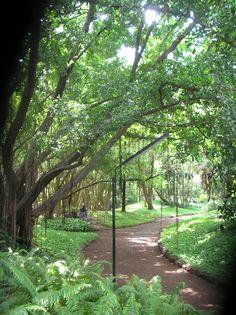 Osho Garden walk-through @ Koregaon Park, Pune, India