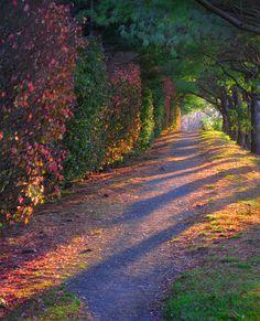 ✮ Rainbow Path