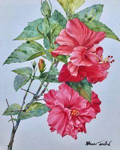 Kitipong Maksin May 18 Watercolor And Ink, Watercolor Flowers, Watercolor Paintings, Bird Drawings, Colorful Drawings, Botanical Art, Botanical Illustration, Rose Oil Painting, Painting Gallery