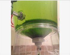 #DIY Bucket Algae Drainer!! Get the Algae out of your fish tank fast! #DIYReformBucket